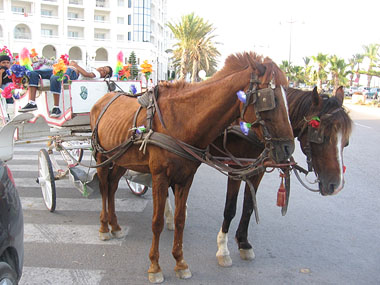Malnourished tourist cart horses in the resort of Yasmine Hammamet, Tunisia