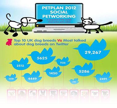 Petplan 2012 Social Petworking poster